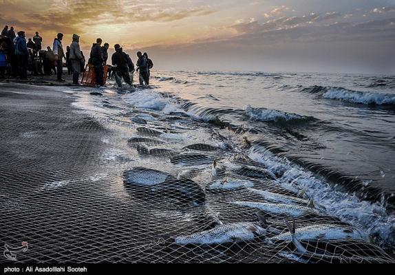 ۱۰۰۰ تن ماهی استخوانی امسال از دریای خزر صید شد