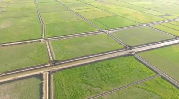 افزایش دو برابری تولید محصول در اراضی زهکشی شده بندرترکمن