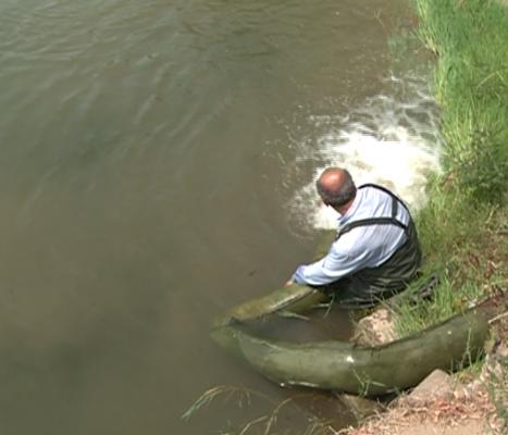 عزم جدی شیلات گیلان برای حفظ ذخایر ماهیان خزر