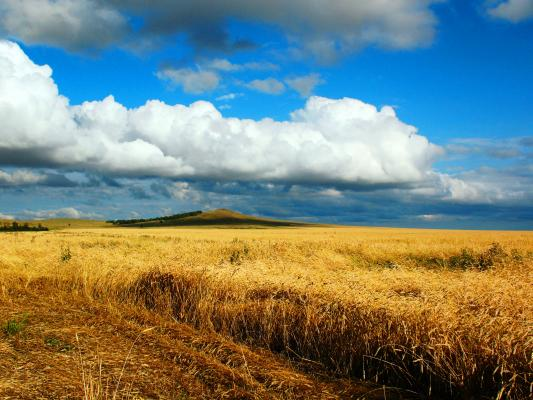 Kazakhstan's wheat production forecast at 13 million tonnes