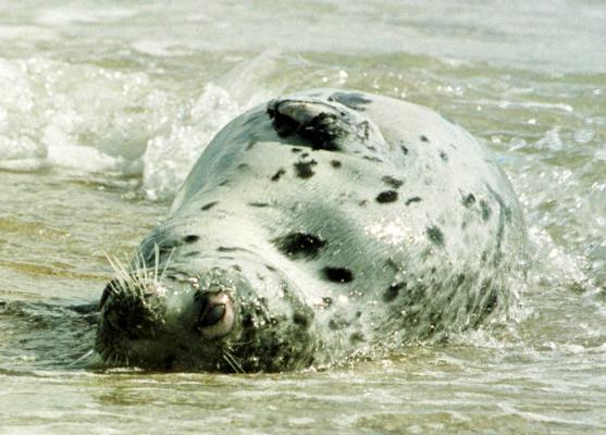 Берега Каспия усеяны трупами тюленей