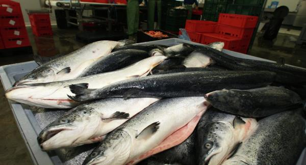 Iran to Import Salmon From Russia