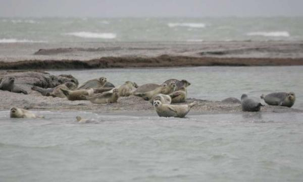 Foraging strategies of smallest seals revealed in first ever satellite tracking study