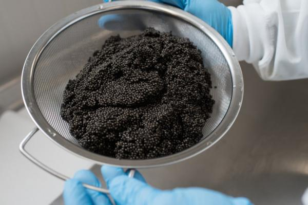 Caviar exports from Iran up 183 percent