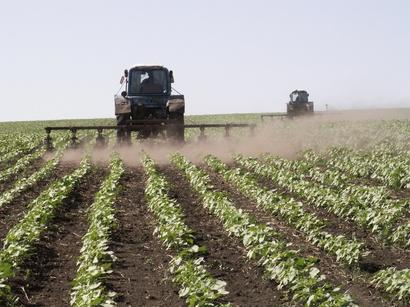 Turkmenistan adopts law on state regulation of agricultural development