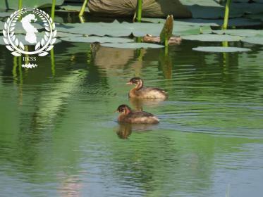 Краткая информация о водно-болотном угодье «Иилуфаре Аби Хейдаркола» в в городе Бабол в провинции Мазандаран